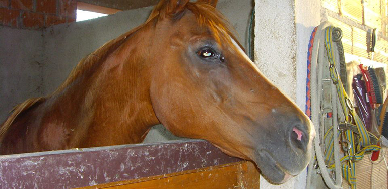 Pergola a Cavallo