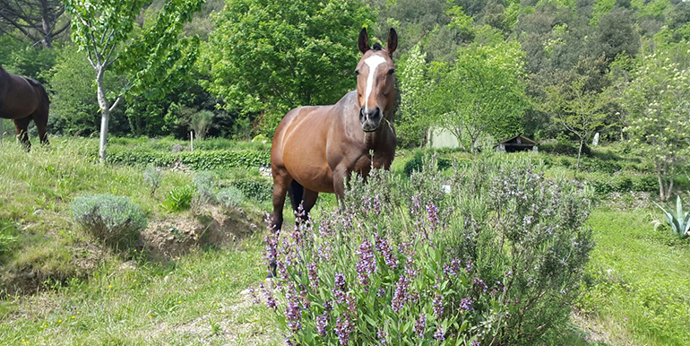 sports360-finale-ligure-equitazione-easy-horse-center-passeggiate-cavallo-19